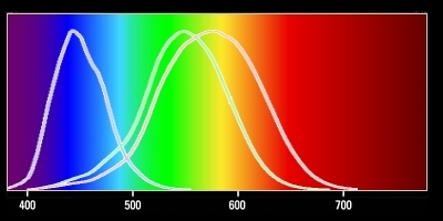 Color response curves of cone cells in human eye.
